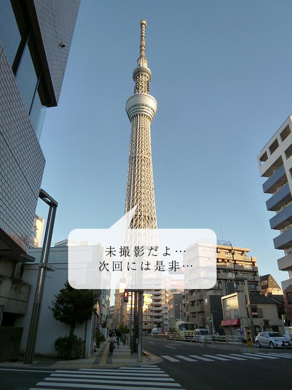 CAT PHOTO:社号石2