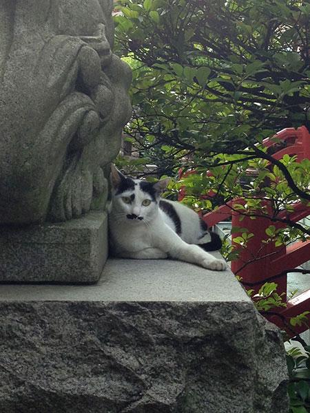 CAT PHOTO:秋葉神社