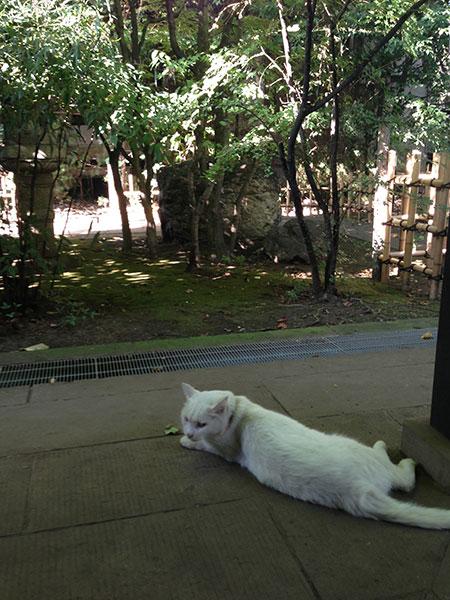 CAT PHOTO:愛宕神社