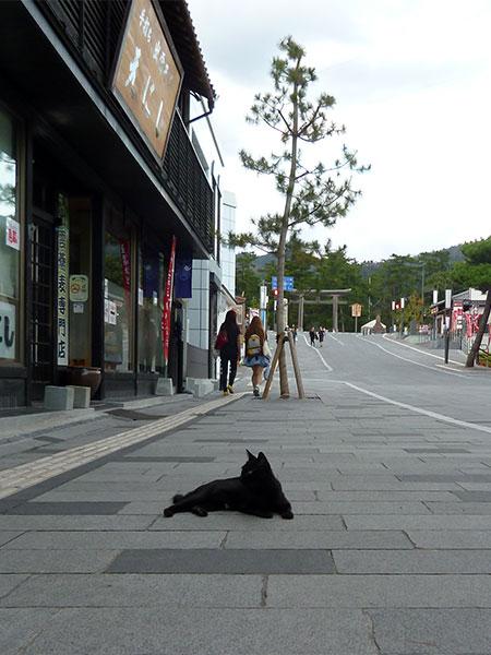 CAT PHOTO:出雲大社
