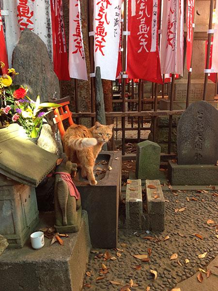 CAT PHOTO:豊川稲荷(赤坂)