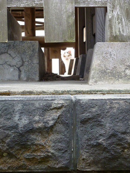 CAT PHOTO:香取神社(市川)