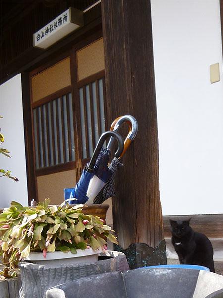 CAT PHOTO:白山神社