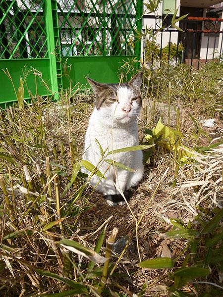 CAT PHOTO:胡録神社(市川)