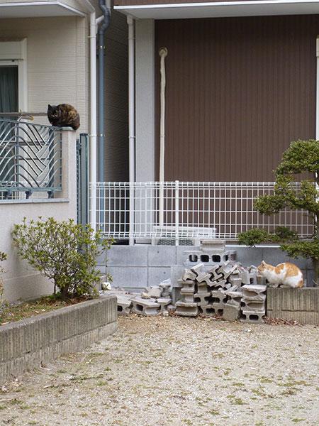 CAT PHOTO:豊受神社(市川)