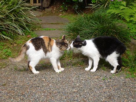CAT PHOTO:水稲荷神社
