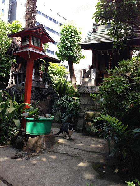 CAT PHOTO:柳森神社
