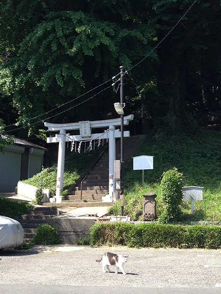 CAT PHOTO:水神社