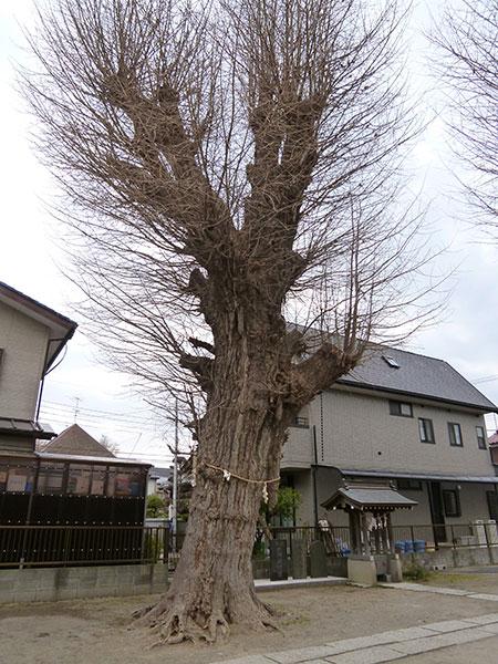 OTHER PHOTO:本行徳 八幡神社