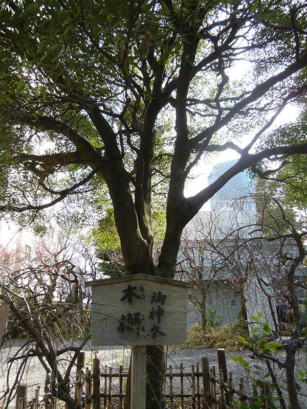 OTHER PHOTO:北野神社[牛天神]
