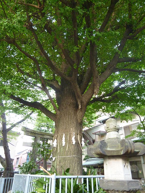 OTHER PHOTO:秋葉神社(向島)