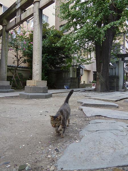 CAT PHOTO:小野照崎神社