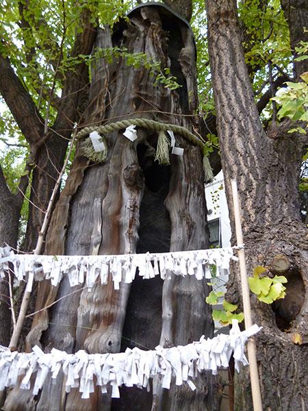 OTHER PHOTO:大塚天祖神社