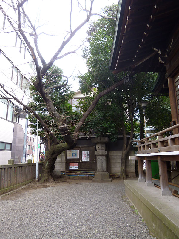OTHER PHOTO:櫻木神社