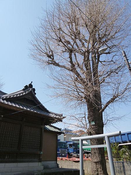 OTHER PHOTO:下今井 香取神社