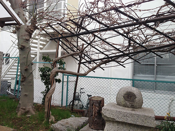 OTHER PHOTO:八坂神社(津田沼)